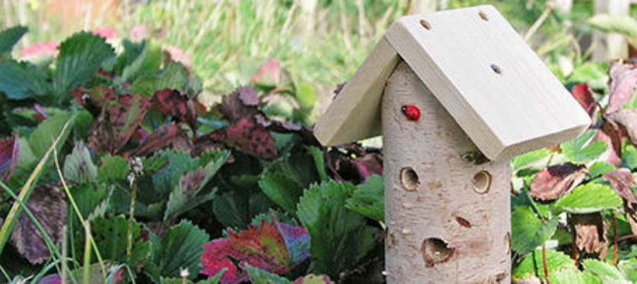 Header_garden-friends-ladybird-tower