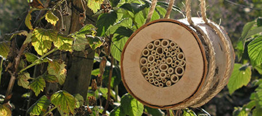 Header_garden-friends-bees-bugs-pollinating-bee-log