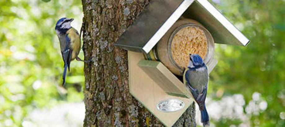 Header_garden-friends-birds-peanut-butter-bird-feeder