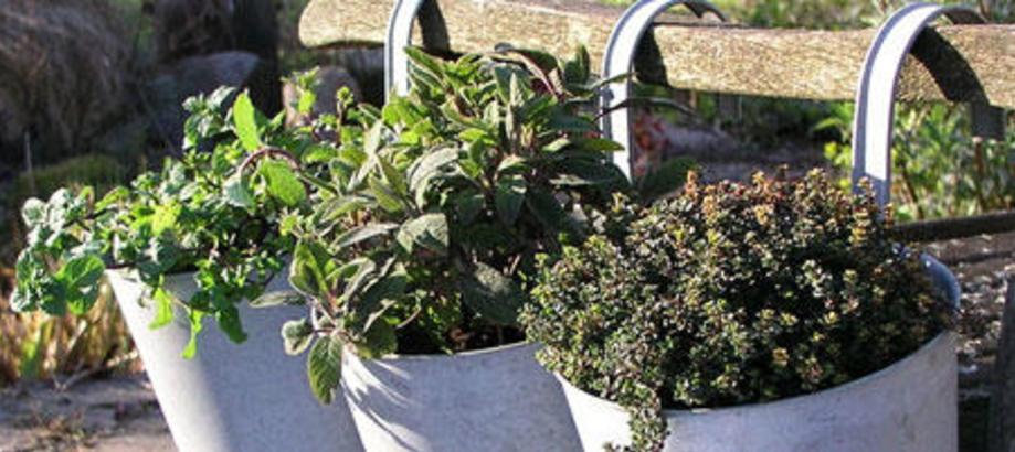 Header_garden-art-decor-balcony-balcony-planters