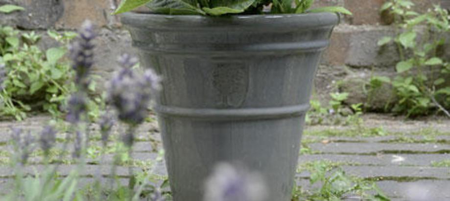 Header_plant-stuff-pots-antique-grey-pots