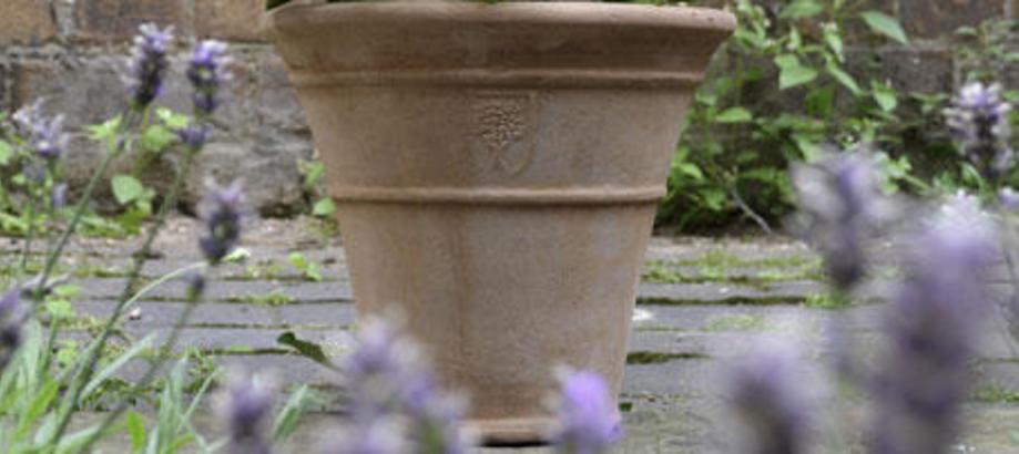 Header_plant-stuff-terracotta-terracotta-plant-pot