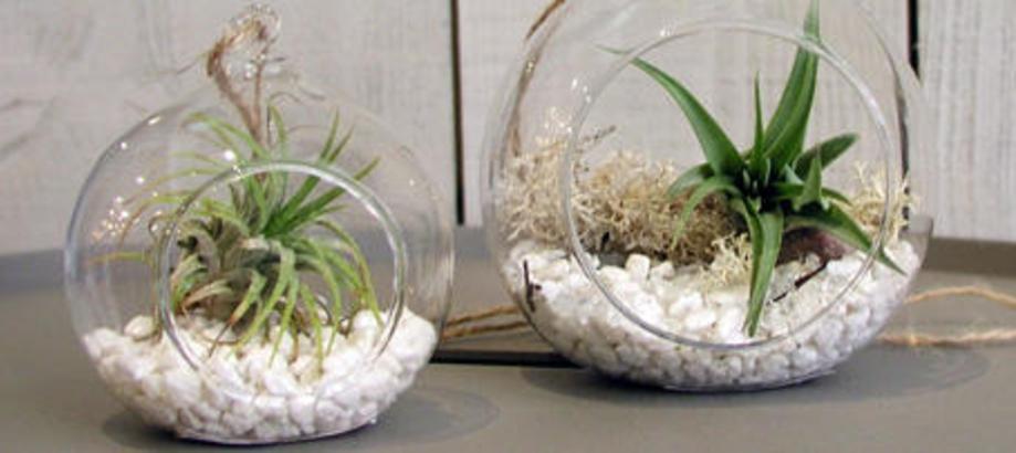 Header_houseplants-air-plants