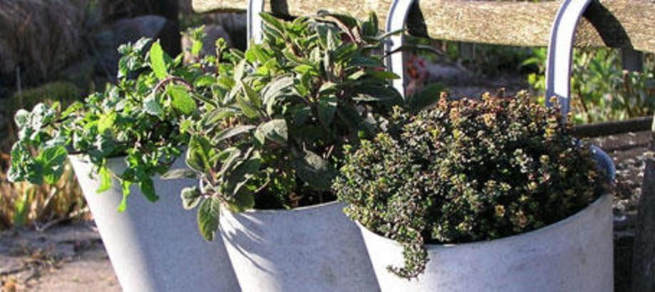 Header_plant-stuff-balcony-planters-balcony-zinc-round-planters