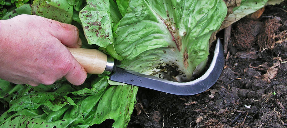 Header_for-the-gardener-small-hand-tools-vegetable-harvesting-knife