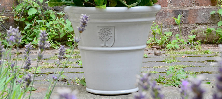 Header_plant-stuff-pots-glazed-white-pot