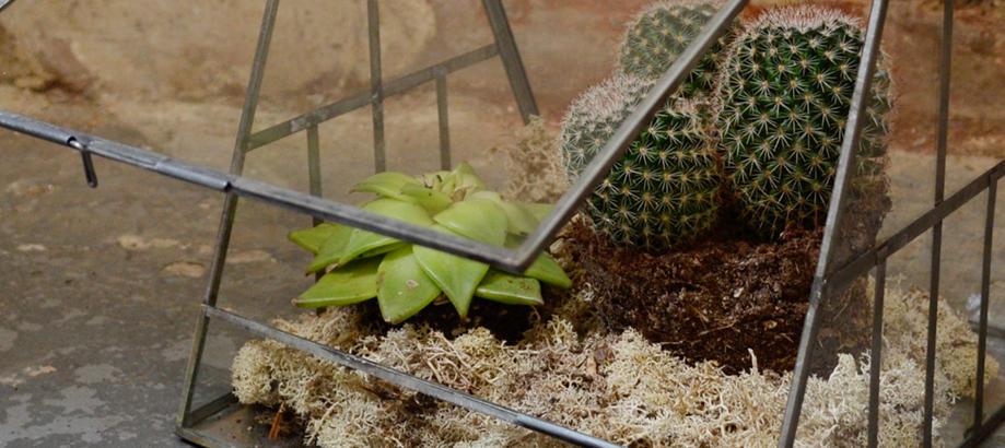 Header_plant-stuff-propagation-_-protection-antique-house-terrarium