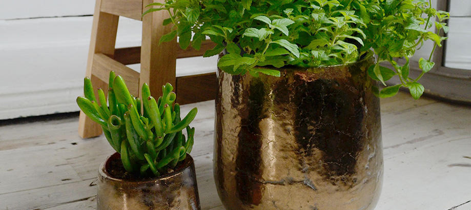 Header_plant-stuff-indoor-plant-pots-divine
