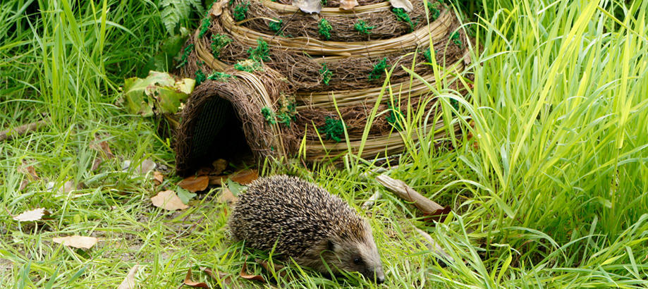 Header_garden-friends-gifts-between-25-50-hedgehog-igloo
