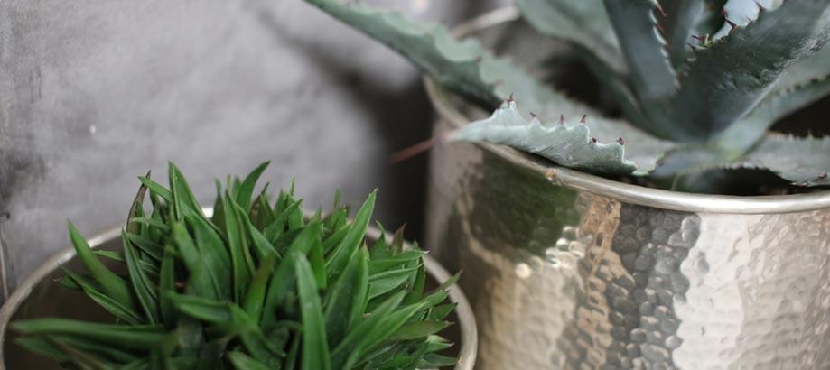 Header_plant-stuff-gifts-over-100-hammered-planter