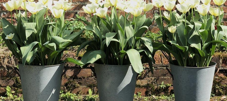 Header_plant-stuff-materials-zinc-planter