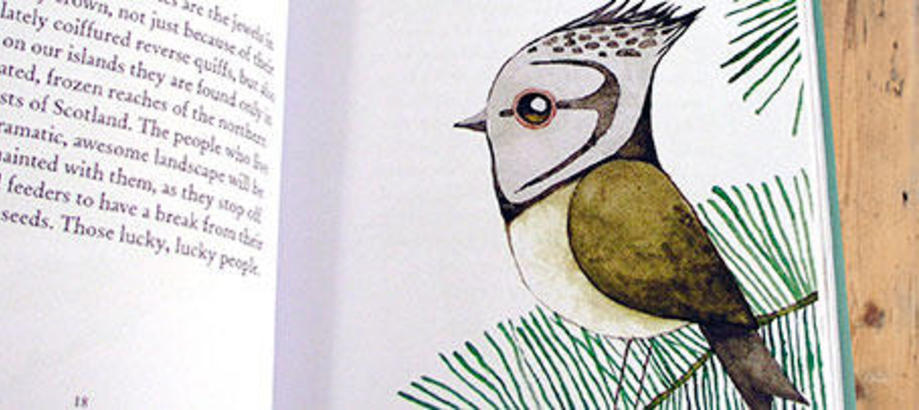 Header_garden-guidance-inspirational-books-our-woodland-birds-close-up