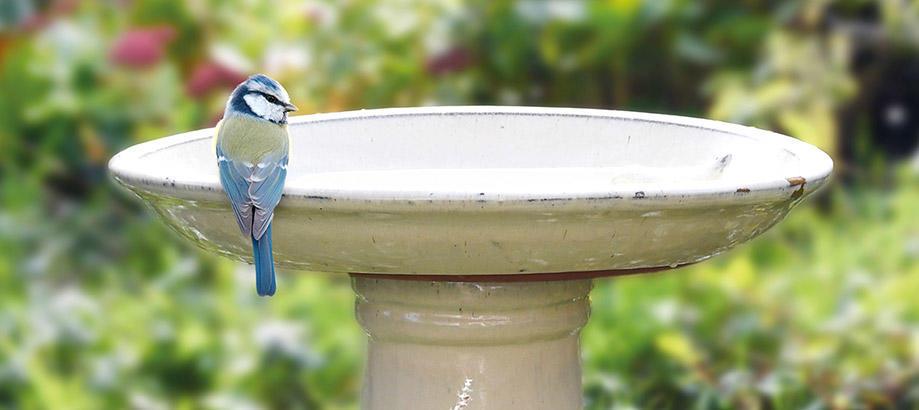 Header_garden-friends-over-50-cream-birdbath