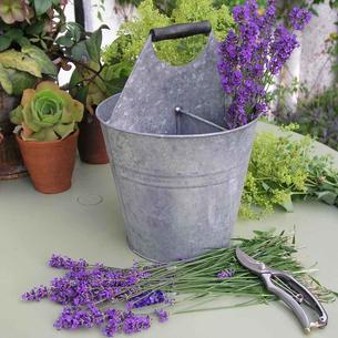 Antique Grey Herb Bucket