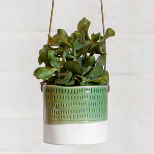 Indoor Pie Crust Hanging Pot
