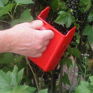 Berry Picker