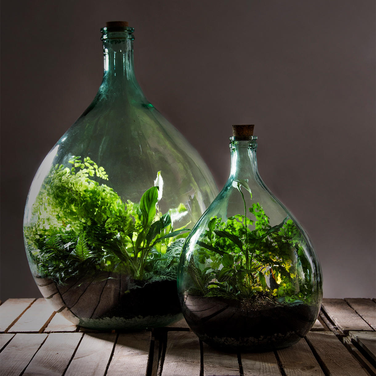 Buy Large Bottle Terrariums The Worm That Turned Revitalising Your Outdoor Space