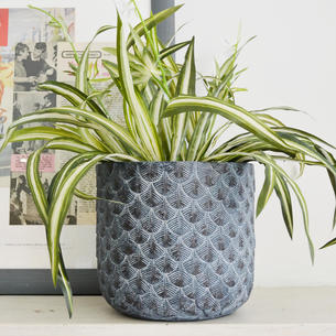 Indoor Plant Pots The Worm That Turned Revitalising Your Outdoor