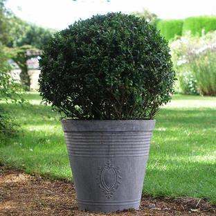 Zinc Embossed Planter