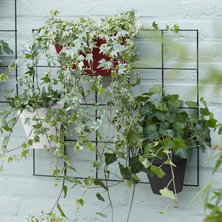 Urban Display Plant Wall Frame