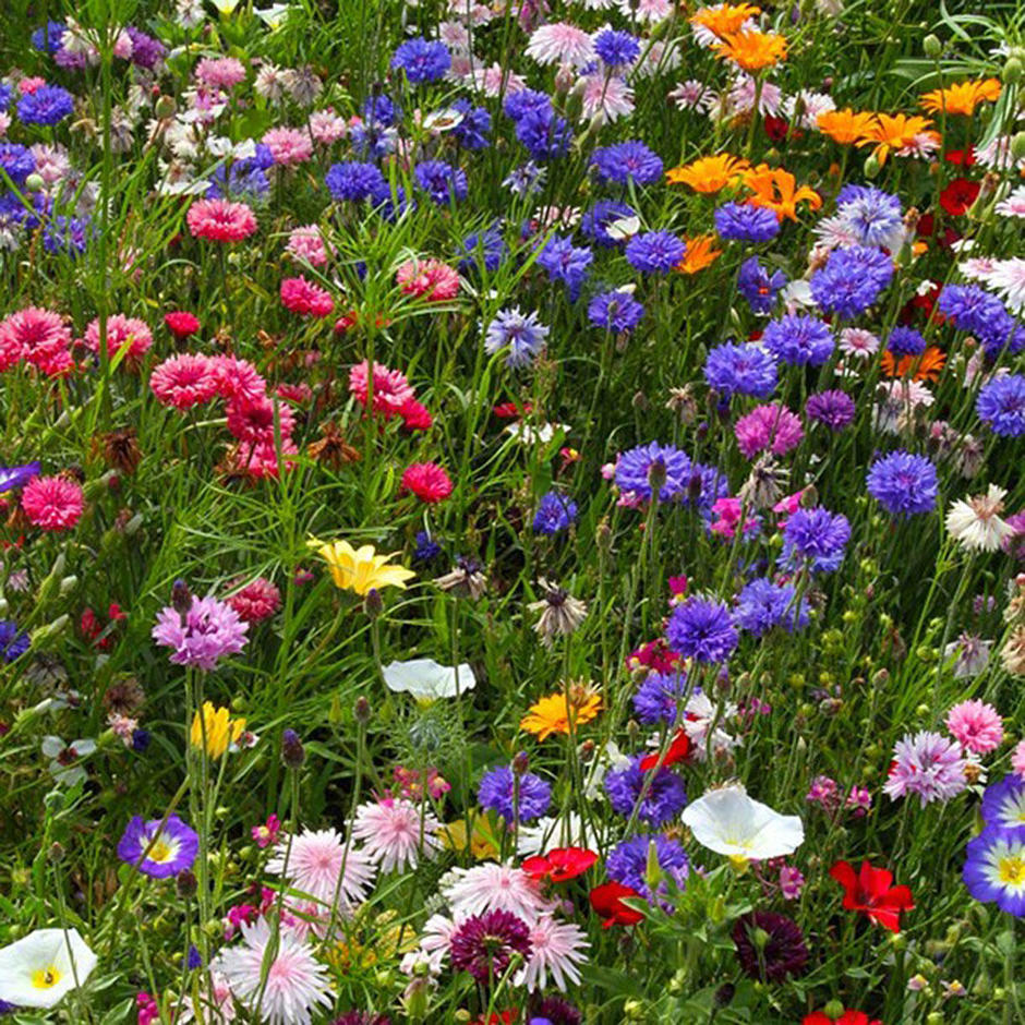 Cottage Garden Meadow Seeds