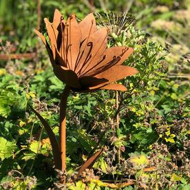 Rusty Lily Garden Flower