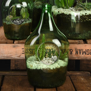 Open Terrarium Bottle