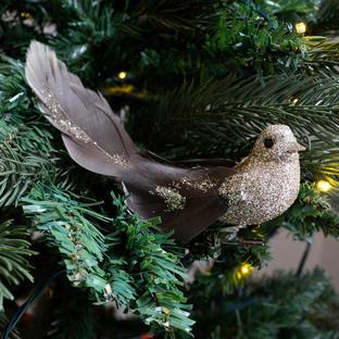Burnished Bronze Long Tailed Birds