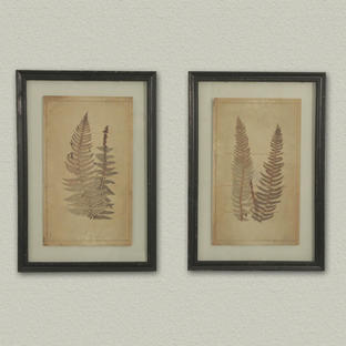 Fern Leaves Botanical Prints