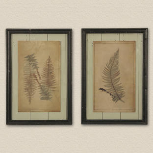 Fern Foliage Botanical Prints