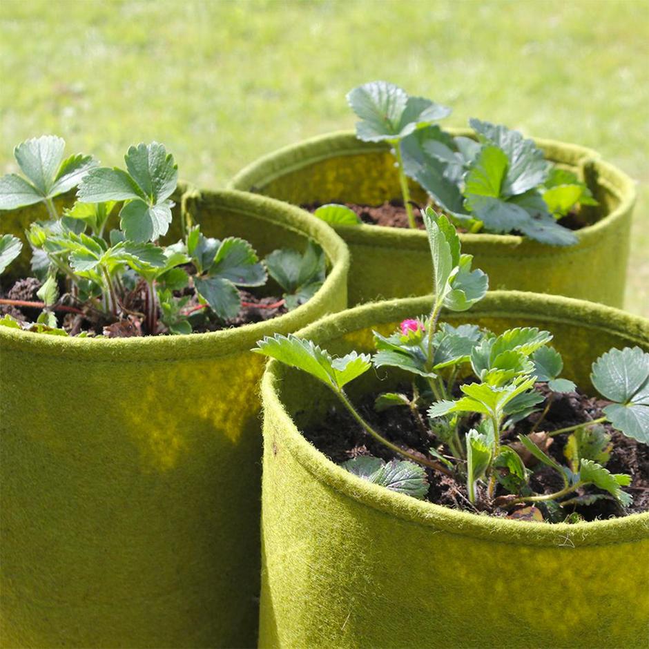 Vigoroot Culinary Herb Pots