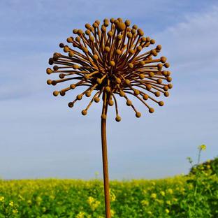 Rusted Seedhead