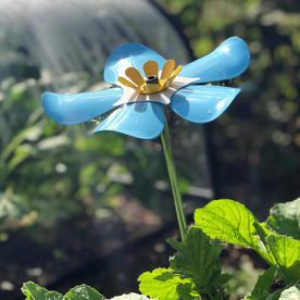 Nottinghamshire Hospice Forget-Me-Not Flowers