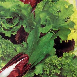 Lettuce & Salad Leaf Seeds