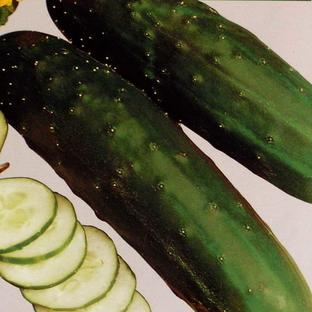 Salad Accompaniment Seeds
