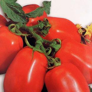 Italian Tomato Seeds