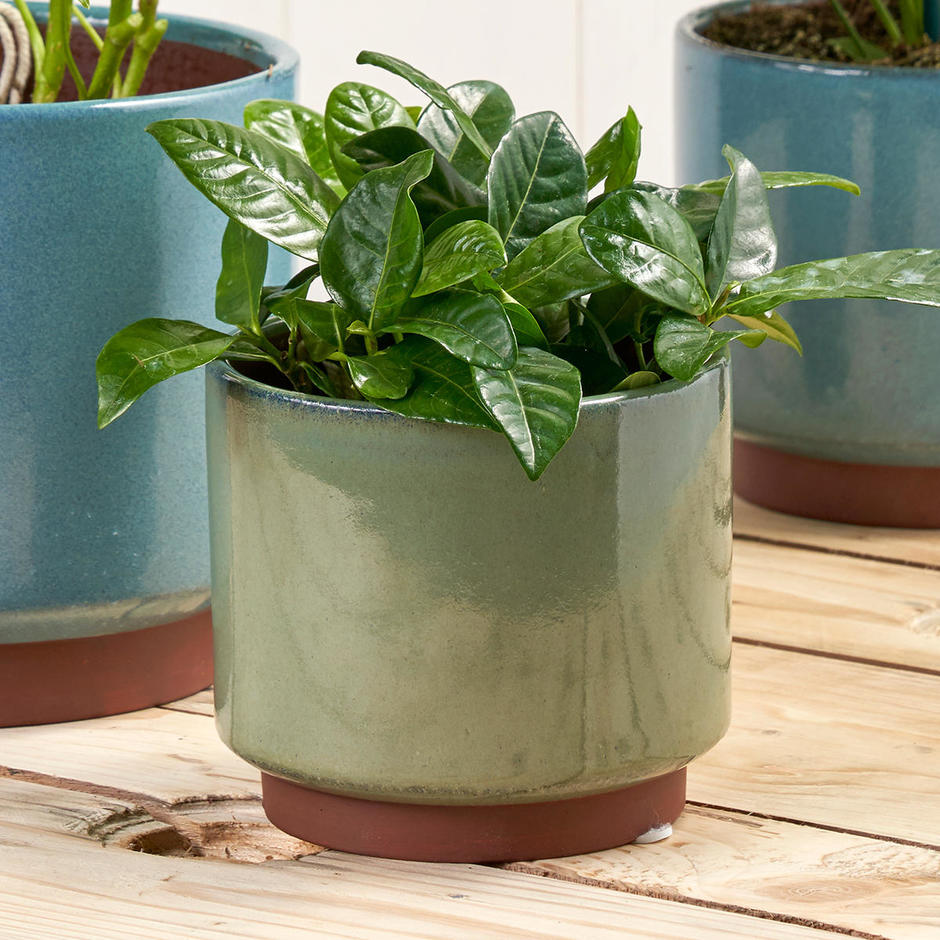 Speckled Glaze Green Indoor Planter