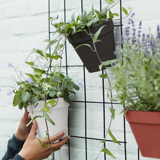 Urban Display Single Wall Pots