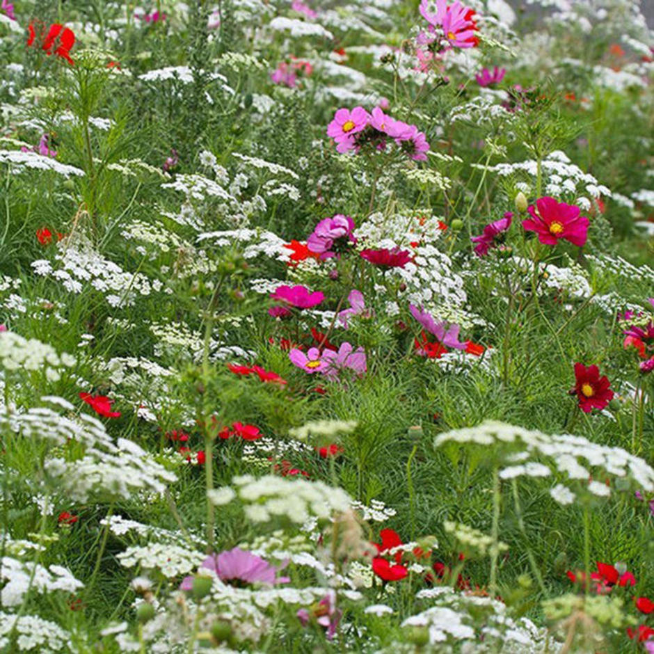 Pastel Cottage Garden Meadow Seeds