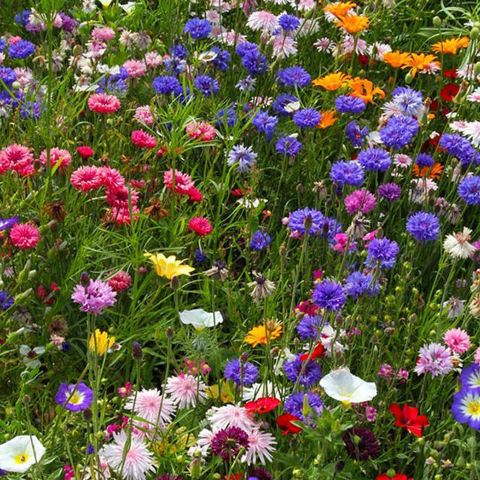 Pixie Cottage Garden Meadow Seeds
