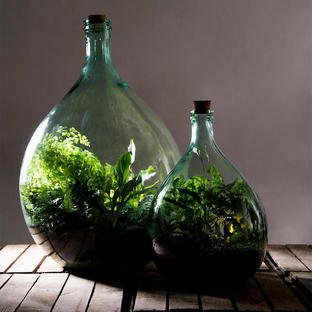 Large Bottle Terrariums Complete Sets
