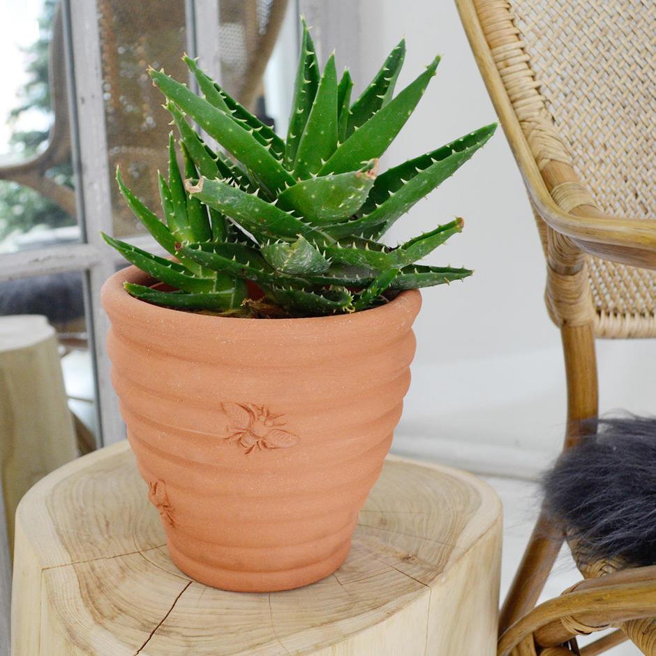 Terracotta Bee Plant Pot