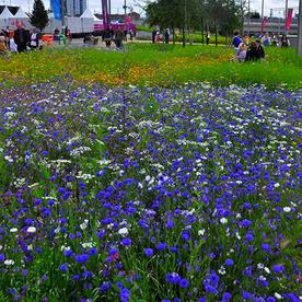 Aqua Meadow Mix Seeds