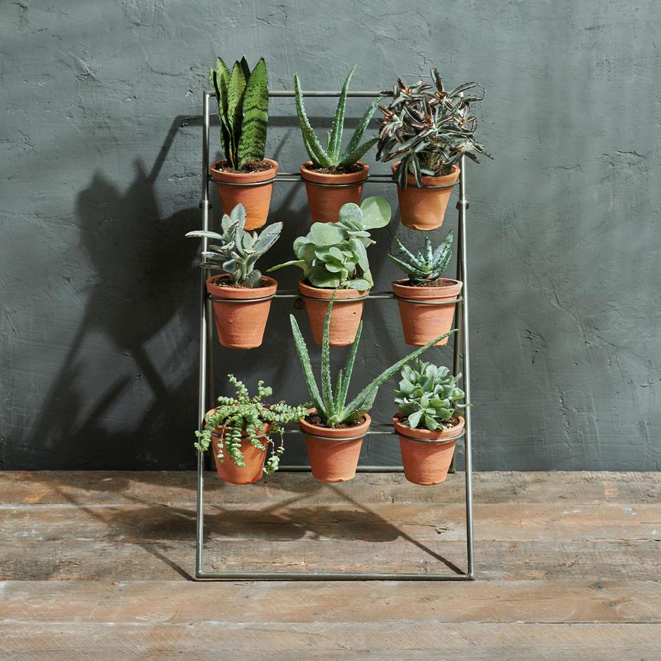 Cactus Plant Theatre
