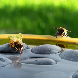 Bee and Butterfly Bath