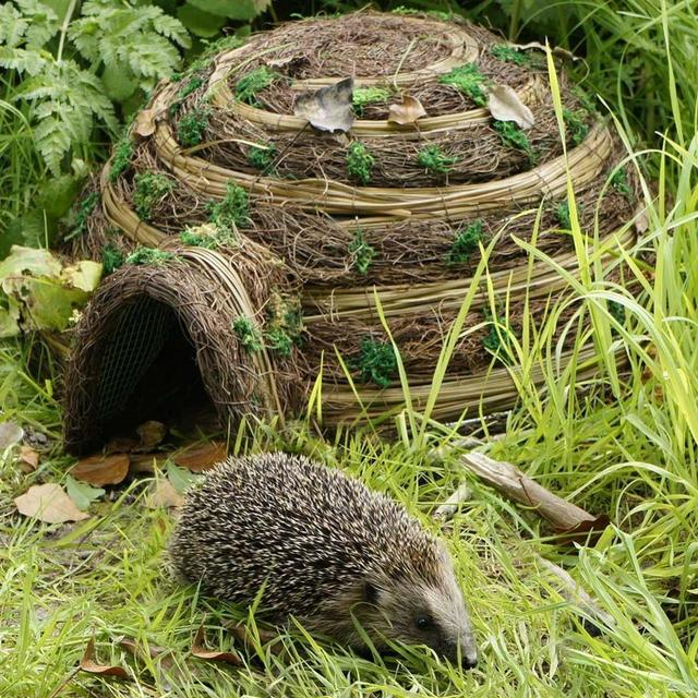 buy hedgehog igloo the worm that turned revitalising your outdoor space. Black Bedroom Furniture Sets. Home Design Ideas