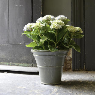Antique Grey Glazed Planters