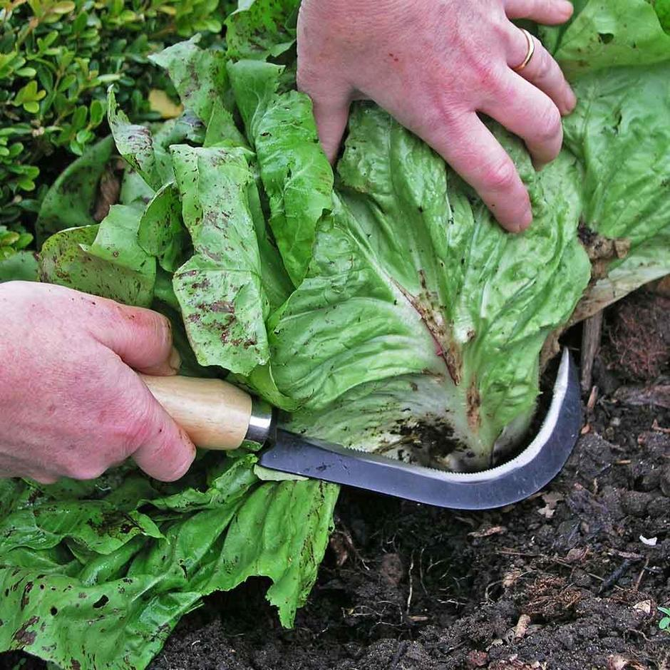 Vegetable Harvesting Knives