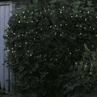 Warm White Outdoor Pin Lights
