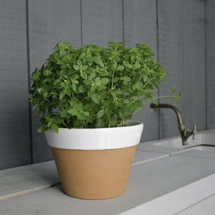 Kitchen Herb Pot